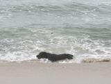 さすが、週末ともなるといつも以上に犬が!今日は泳ぐ犬!その1。