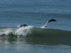 波に乗る、イルカ・・・(城みちるのイルカに乗った少年が、聴こえて来たぁ〜!)