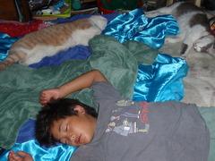 猫がきれいだと・・・こうやって安心して寝れる〜!猫も幸せぇ〜〜!?