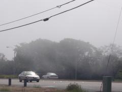 霧が動いてるのが見えますかぁ〜〜!?ビーチブルバードで。2時過ぎ。
