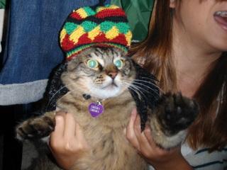 RASTA CATS !2009  しましま