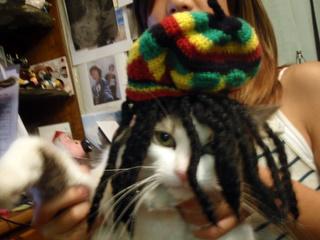 RASTA CATS !2009 ちゅうたろー