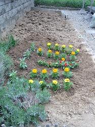 花植えました