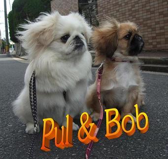 Pul&Bob代表写真.jpg