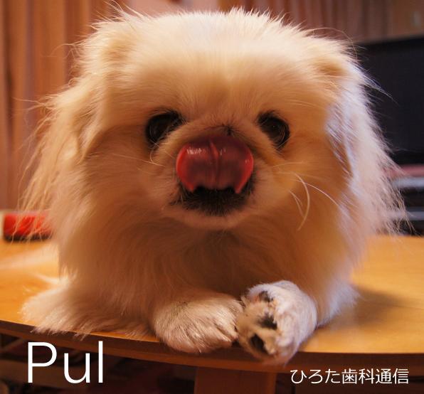 Pulのコピー.jpg