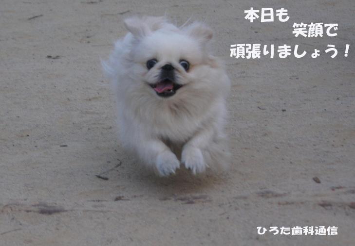 かけっこPulのコピー.jpg
