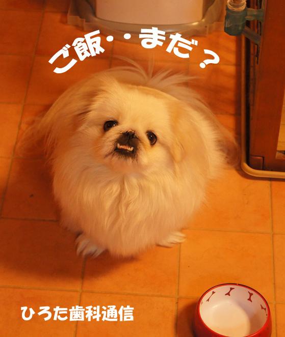 ごはん!のコピー.jpg