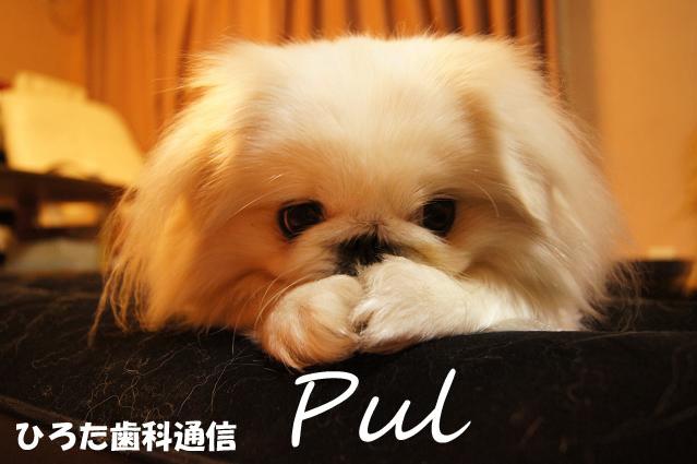 おやすみなさいPulのコピー.jpg