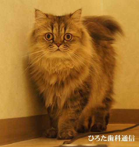 raoのコピー.jpg