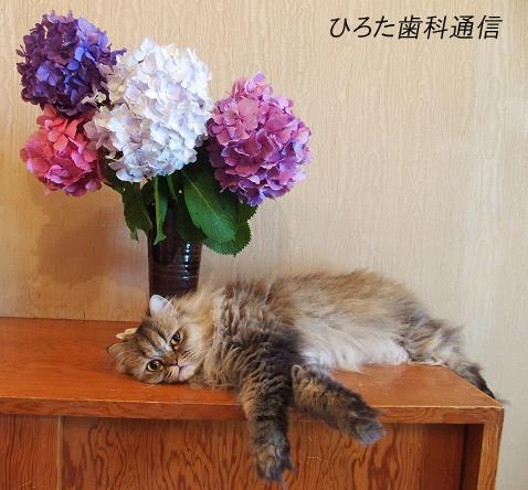 アジサとらおイ無題のコピー.jpg