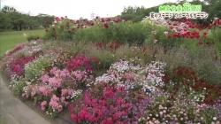 中央植物園(チューリップ)