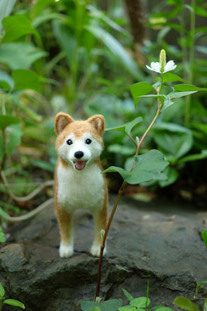 はねつきりんごフェルトオーダーわんこ柴犬