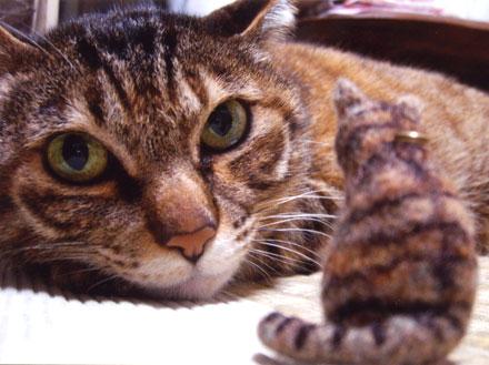 キジトラ猫ジジちゃん
