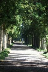 明治の森2