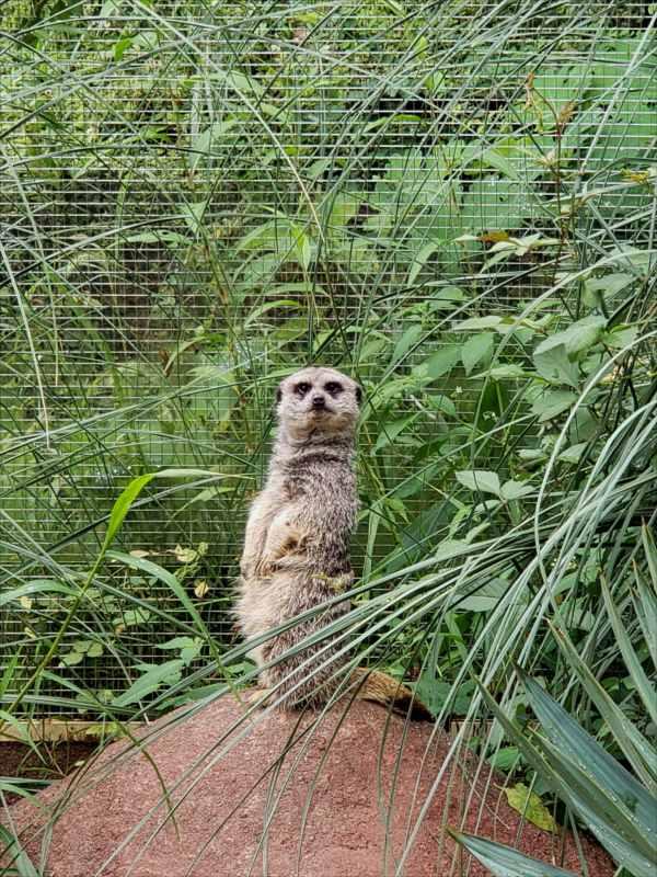 智光山こども動物園