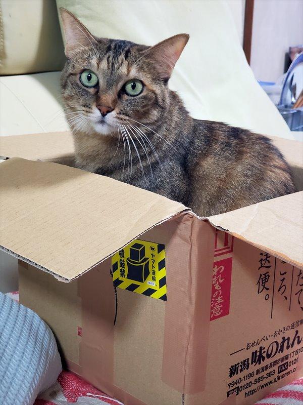 箱シャオラン
