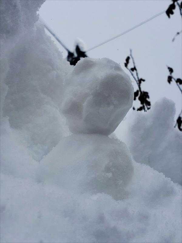 雪かき要員2020