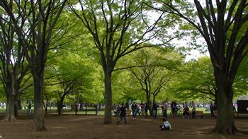 代々木公園inフレブル