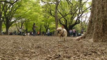 フレンチブルと代々木公園
