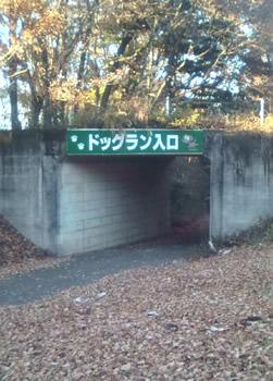 森林公園のドッグラン