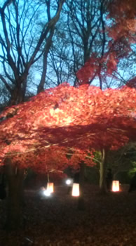 ライトアップされた夜景をフレンチブルドッグと見る