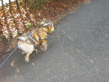 見つけたボールを咥えて走るフレンチブルドッグ