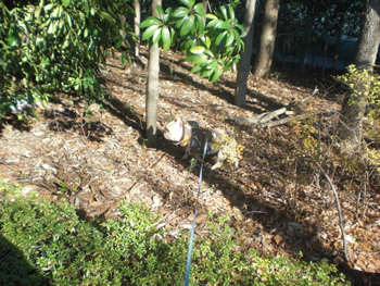 獲物を探すフレンチブルドッグのジュニア