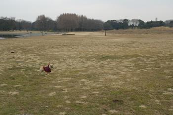 水元公園の自然とフレンチブルドッグ