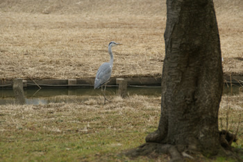 水元公園の鳥さん