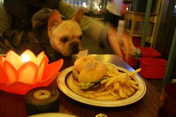 ハンバーガーをほしがるフレンチブルドッグ