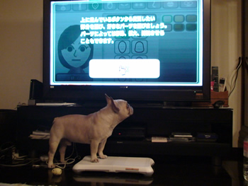 Wiiをするフレンチブルドッグ