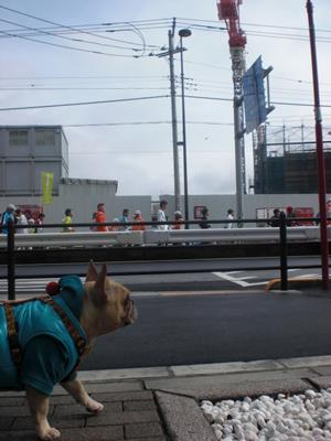 フレンチブルドッグと東京マラソン