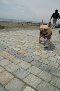 鵠沼海岸とフレンチブルドッグ