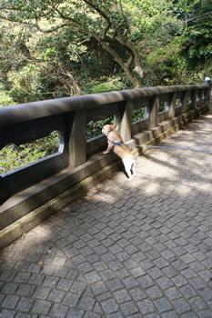 橋から覗き込み