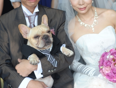 フレンチブルドッグと結婚式の記念撮影