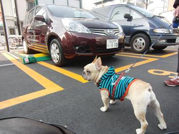 駐車場とフレンチブルドッグ