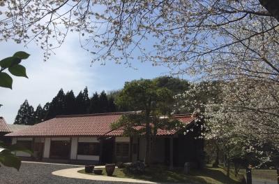 山桜 2018.JPG