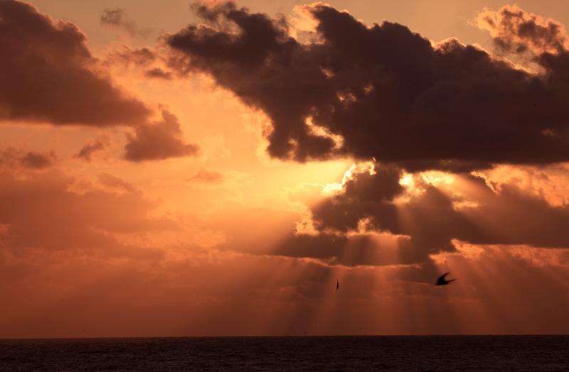 ツバメと夕日