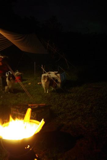 ワンコ達は初めてのキャンプ