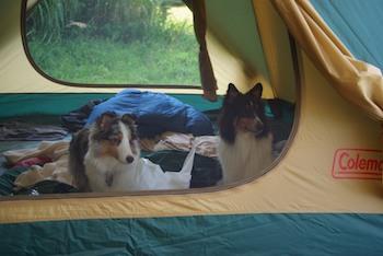 意外とテントの中が気に入っている2匹。