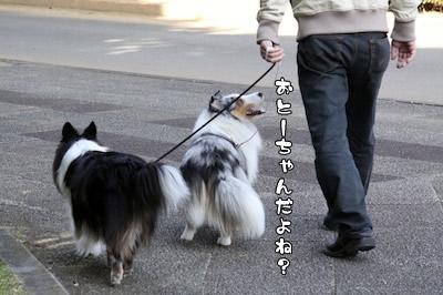 ちょい散歩