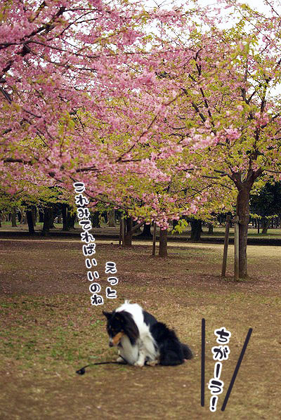 桜と兄ちゃん