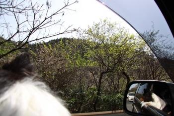 山を見る助手席のMaiki