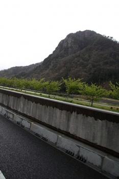 狩野川沿いの若い桜並木