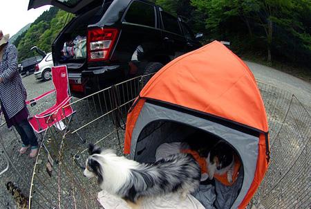犬のスペース