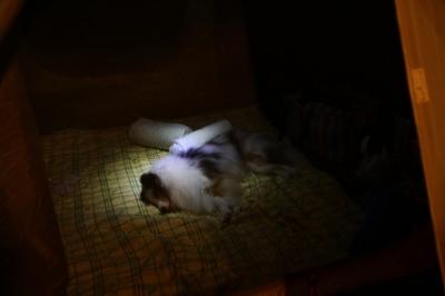 疲れて眠るカイちゃん