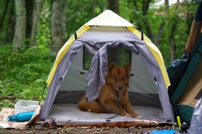 テントに入るエル