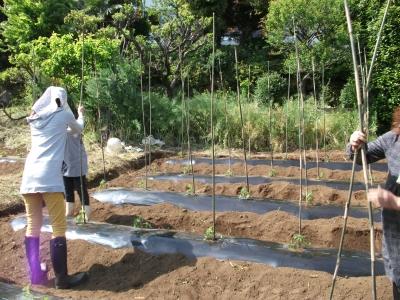 家庭菜園13