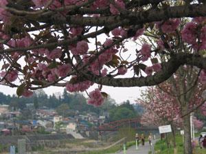 関山と天竜橋