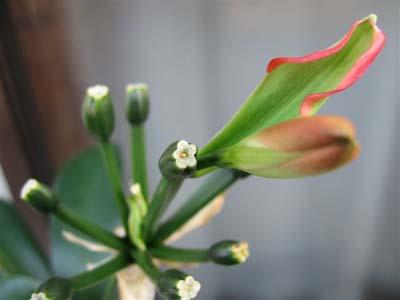 おまけの花